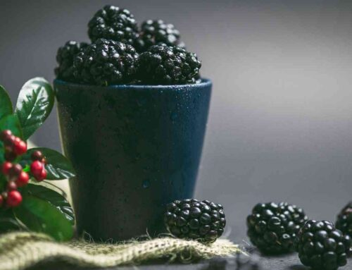 5 health benefits of Mulberry – Good digestion, immunity, & heart!